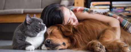 What is Pet Assisted Therapy all about...